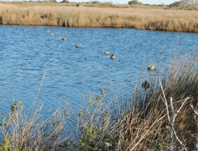 Camp Tahuna's private island is the best place for duck hunting in Hatteras, North Carolina.